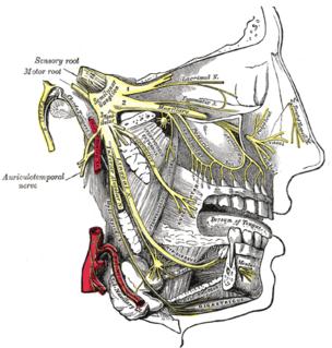 Trigeminal neuralgia neuropathic disorder