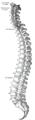 Gray 111 - Vertebral column.png