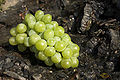 Green Grape 2.jpg