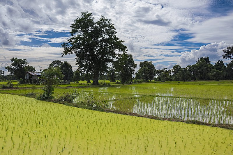 File:Green landscape with opaque paddy fields and cloudy blue sky in Laos (HDR).jpg