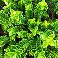 Green plant columns (Unsplash).jpg