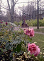 Grot monument and roses.jpg