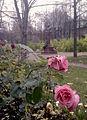 Grot monument and roses.jpg