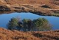 Group of trees on shore of Beacon Tarn - geograph.org.uk - 545282.jpg