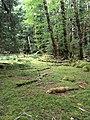 Gwaii Haanas National Park (27519905796).jpg