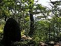 HachikurayamaYakushi-backAndSasakurayama.jpg
