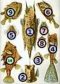 Haeckel Ostraciontes big spots.jpg