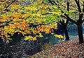 Hagley Park New Zealand. (6) (8069623837).jpg