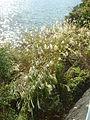 Hakone Ashinoko lake dsc05546.jpg