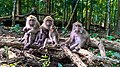 Happy Family (Monkey verse).jpg