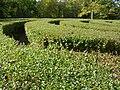 Harmonist Labyrinth PA260091.jpg