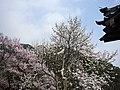 Hasedera Temple 長谷寺 - panoramio (9).jpg