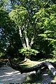Hatfield Forest - geograph.org.uk - 305642.jpg