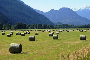 The X-Files: I Want to Believe - A haybale field in Pemberton; like the location used for filming the scene involving the second abduction of FBI agent Cunningham.