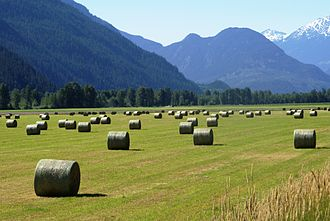 Pemberton, British Columbia - Haybales in a sunny field