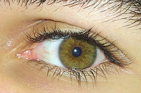 Of the hazel eyes meaning Hazel Eyes: