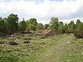 Heathland with birch, Sutton Park - geograph.org.uk - 1859831.jpg