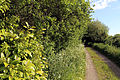 Hellman's Cross, Great Canfield, Essex, England - byroad SW from road junction.JPG