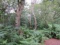 Helsby Hill (5).JPG