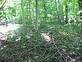 Hillside Haven Mound.jpg