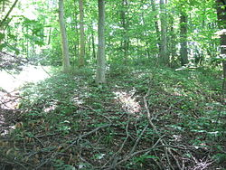 Hillside Haven Mound.jpg