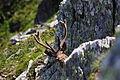 Hirsche fürstkar 1334 13-07-13.JPG