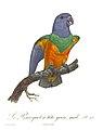 Histoire naturelle des perroquets (9949565244).jpg