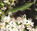 Hmyz03507.JPG
