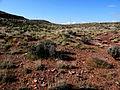 Holmgren milkvetch - habitat (Astragalus holmgreniorum) (6307396230).jpg