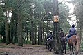 Horse riding on East Budleigh Common - geograph.org.uk - 1139422.jpg