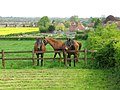 Horses in a paddock at Great Chart, Kent, England.jpg
