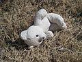 Horton Gardens Apts Northaven Shelby County TN 2014-02-23 001.jpg