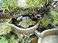 Hydrophyte House - Wellesley College - DSC09757.JPG
