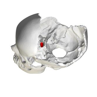 Sella turcica - Image: Hypophysial fossa 01