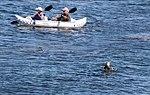 Ignoring the Otter (14962814653).jpg