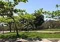 Iguape - SP - panoramio (204).jpg