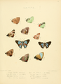 Illustrations Diurnal Lepidoptera 2 - Plate 31.png