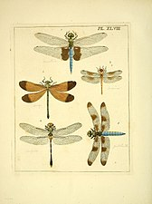 Illustrations of natural history (Pl. XLVIII) (8119068925).jpg