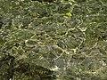 Imerolia, Greece - panoramio (3).jpg