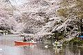 Inokashira Park 2009-04-05 (3446859212).jpg