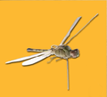 Insectothopter.png