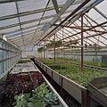 Interieur potplantenkas - Aalsmeer - 20404728 - RCE.jpg