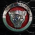 Jaguar (25743482616).jpg