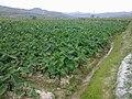 Jian'ou, Nanping, Fujian, China - panoramio (3).jpg