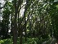 Jindai Botanical Garden , Cho-fu city , Tokyo - panoramio (2).jpg