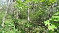 Jubilee Wood, Malden Rushett 10.JPG