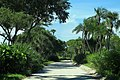 Jungle Trail South - Between Trees (41326626050).jpg