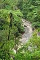 Kaituna River (Kahurangi National Park).jpg
