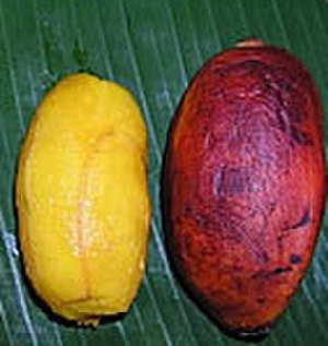 Fe'i banana - Peeled and unpeeled Karat bananas