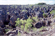 Limestone pinnacles remain after phosphate mining.